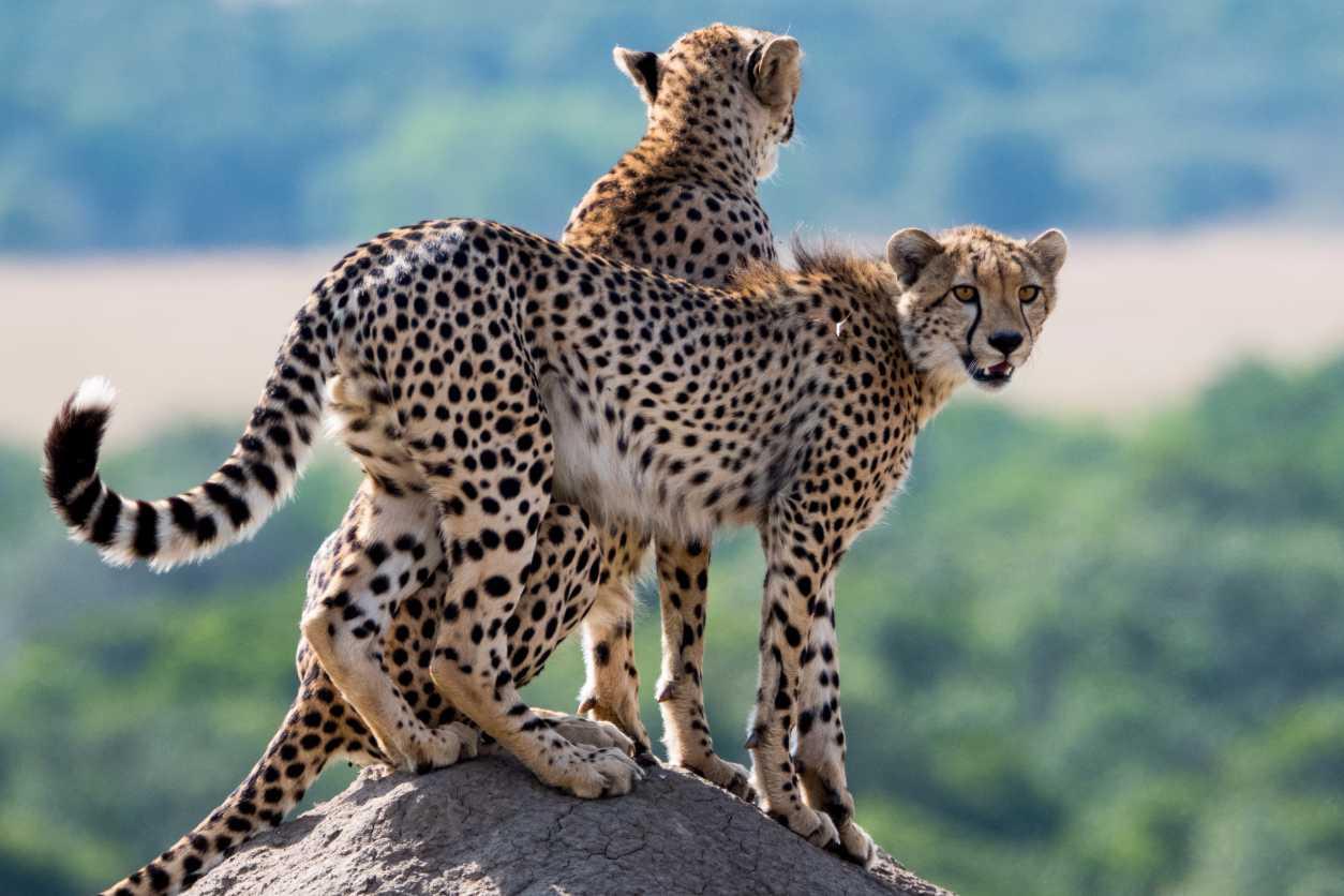 7 days masai mara safari holiday